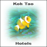 kohtaoaccommodation